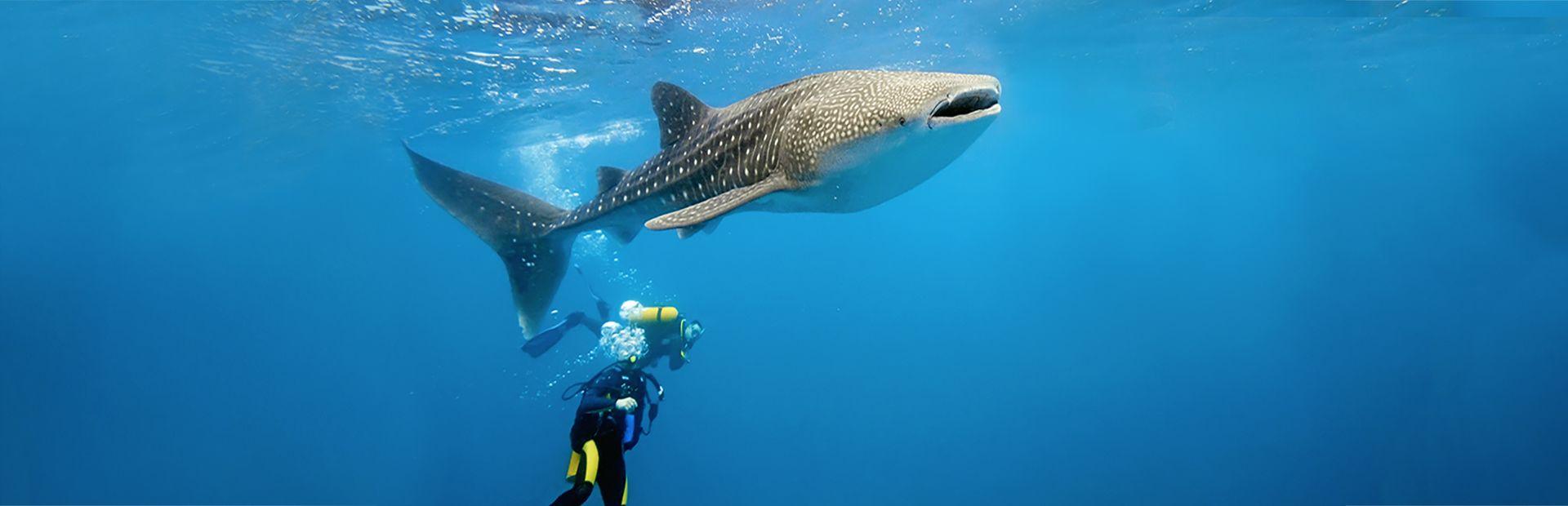 Dhigufaru Island Resort - Baa Atoll, Maldives